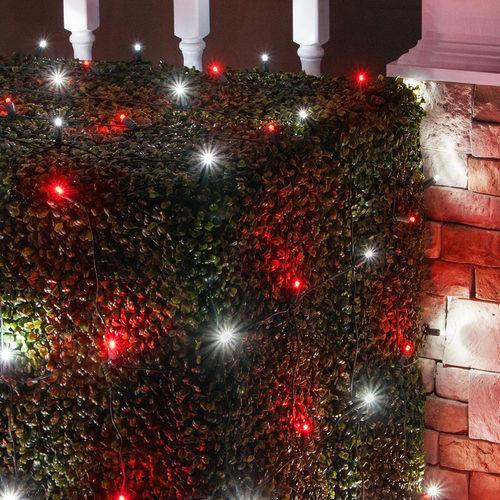 Red and Cool White 5mm LED Christmas Net Lights - 100 Bulbs - 4\u0027x6