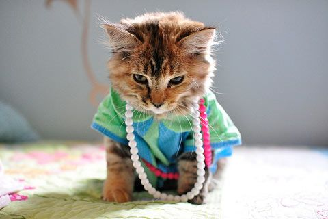 Google Image Result for http://funnyandspicy.com/wp-content/uploads/2010/12/Funny-Cats-Costumes-11.jpg