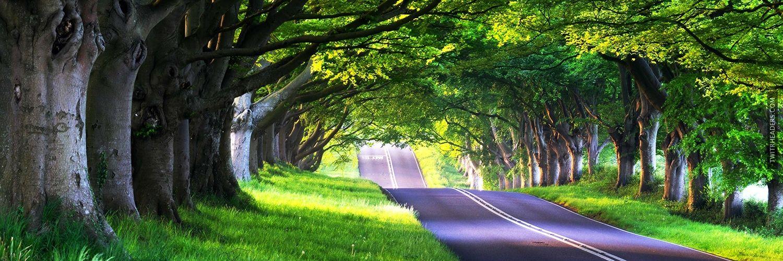 Roadside Trees Twitter Header Cover Street Trees Tree Tree