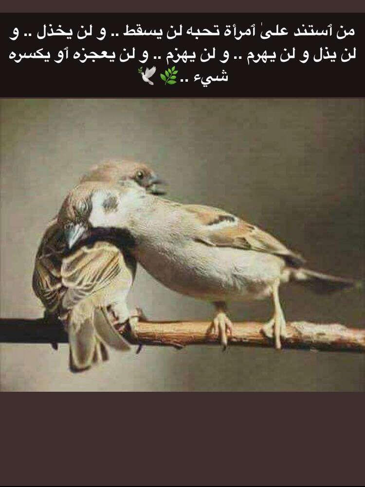 Pin By Mahassen Ezz On ك ـل ـمـات Arabic Love Quotes Painting Life Quotes