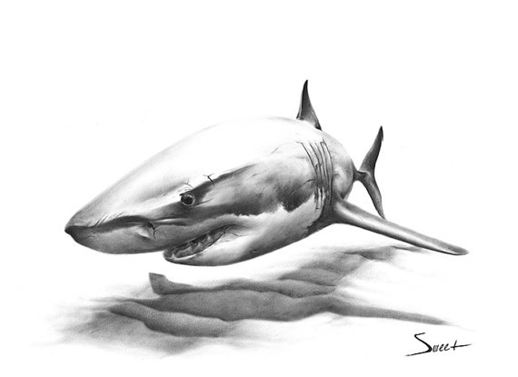 SHARK ART PRINT - great white shark painting, shark print, shark ...