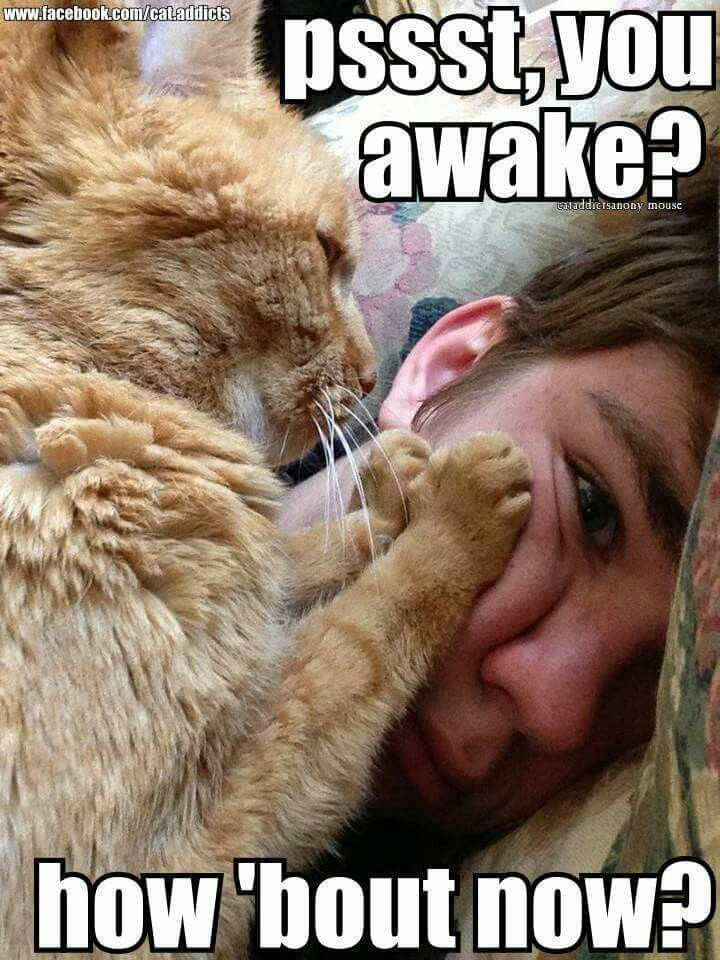 Kitteh Wakeup Call Funny animals, Funny animal pictures