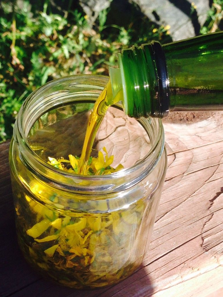 How to Make St John's Wort Oil St johns wort, Herbalism