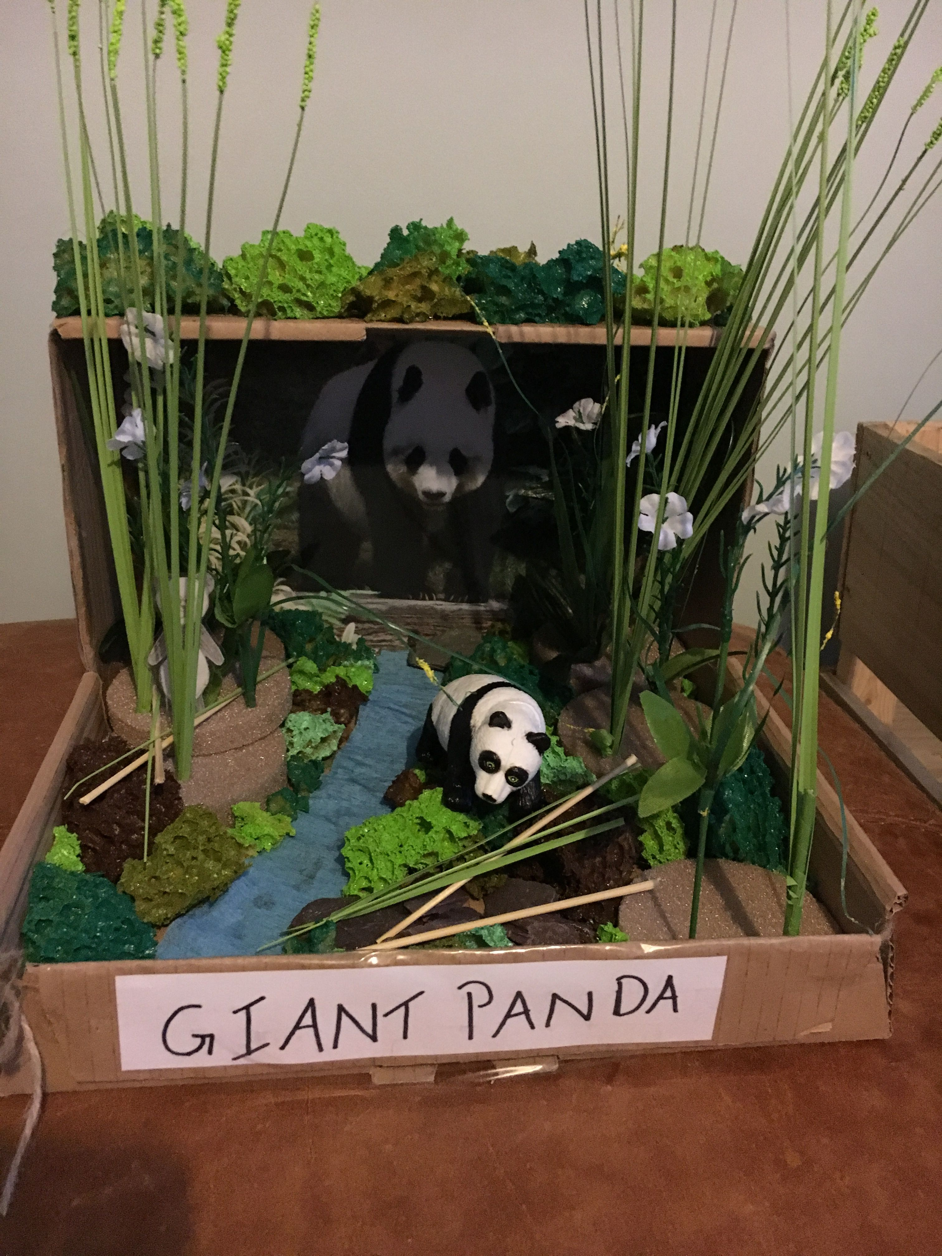 Panda Habitat school project..... mostly made from things