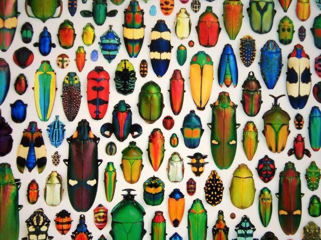 die besten 25 insektenkunst ideen auf pinterest. Black Bedroom Furniture Sets. Home Design Ideas