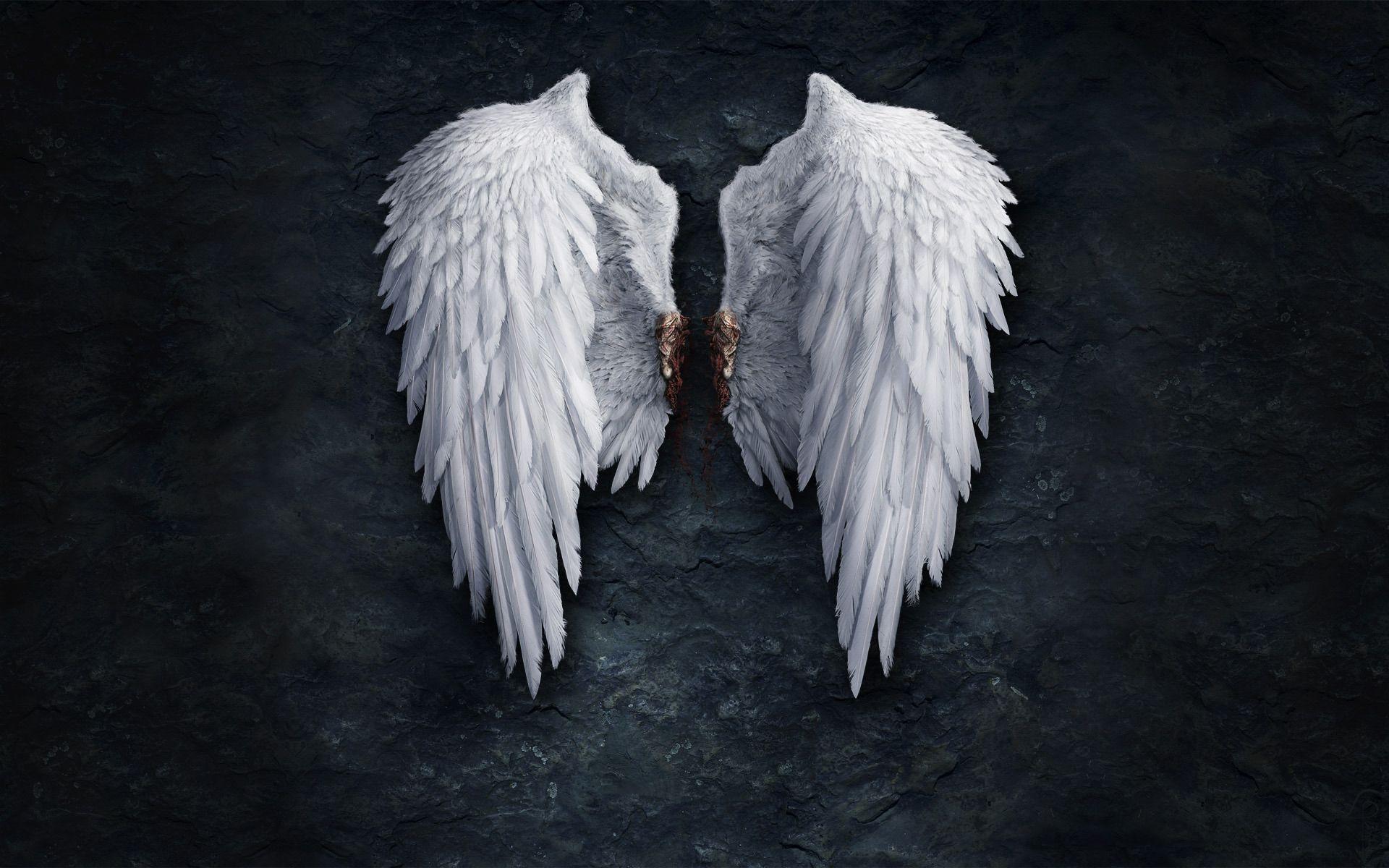 Most Downloaded Angel Wings Wallpapers Full Hd Wallpaper