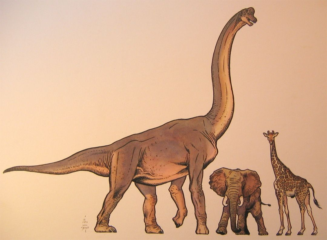 Relative Sizes Of A Brachiosaurus Elephant And Giraffe By William Stout 1990