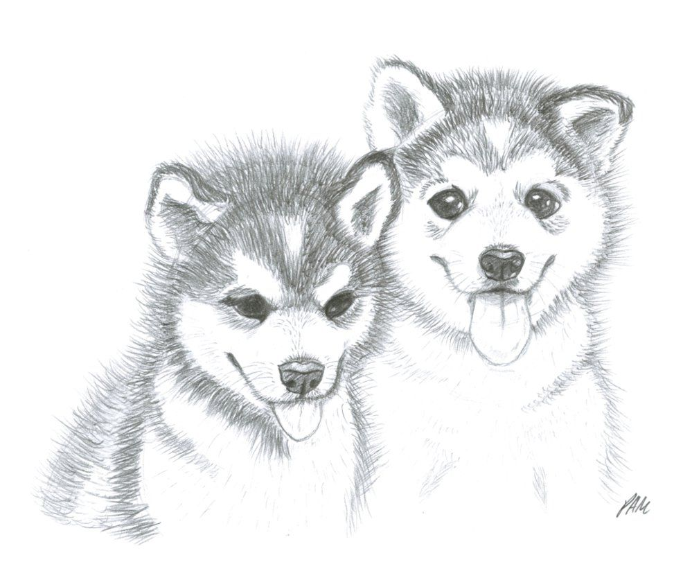 Image result for husky puppy drawing   Puppy drawing ...