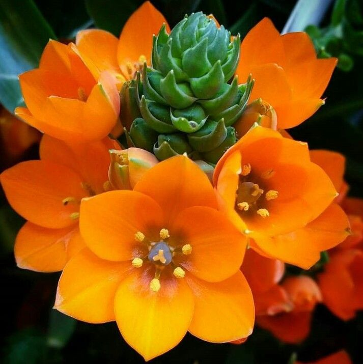Flowers Quotes About Everything Flowers Flowers Exotic Flowers