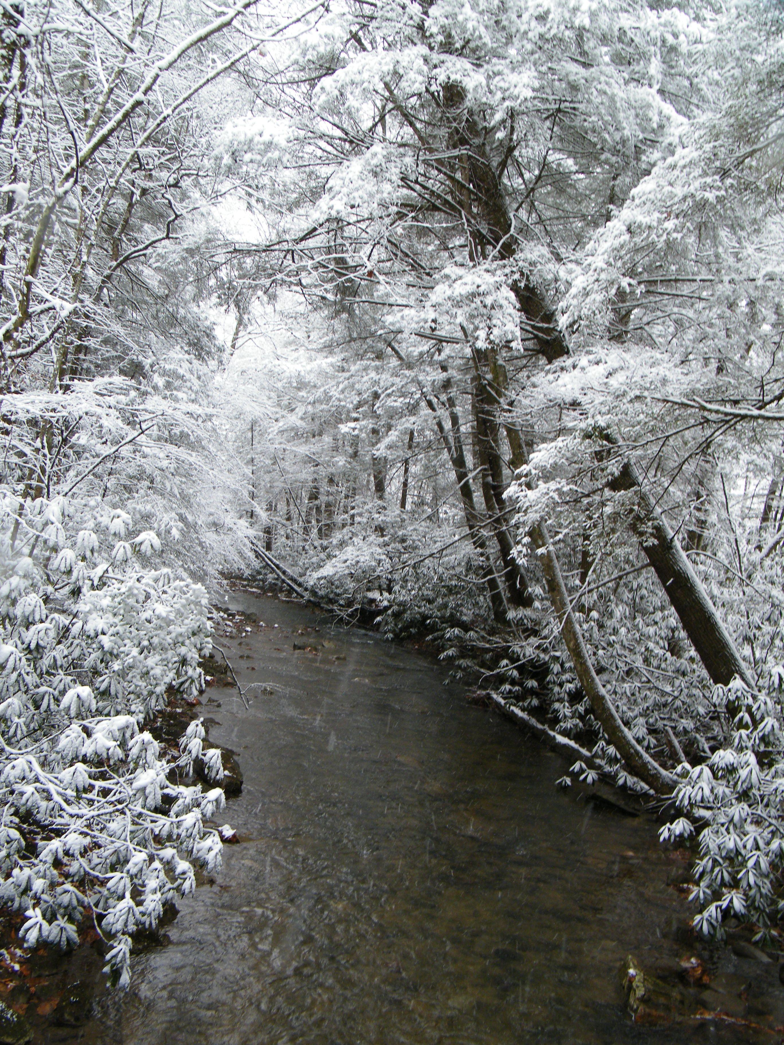 Wild River - Martin's Fork, KY