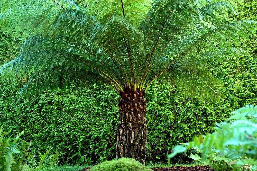 A qui est passionné et possède la main verte, rien n'est impossible en matière de jardinage ! C'est ce dont témoigne le parcours de la propriétaire...