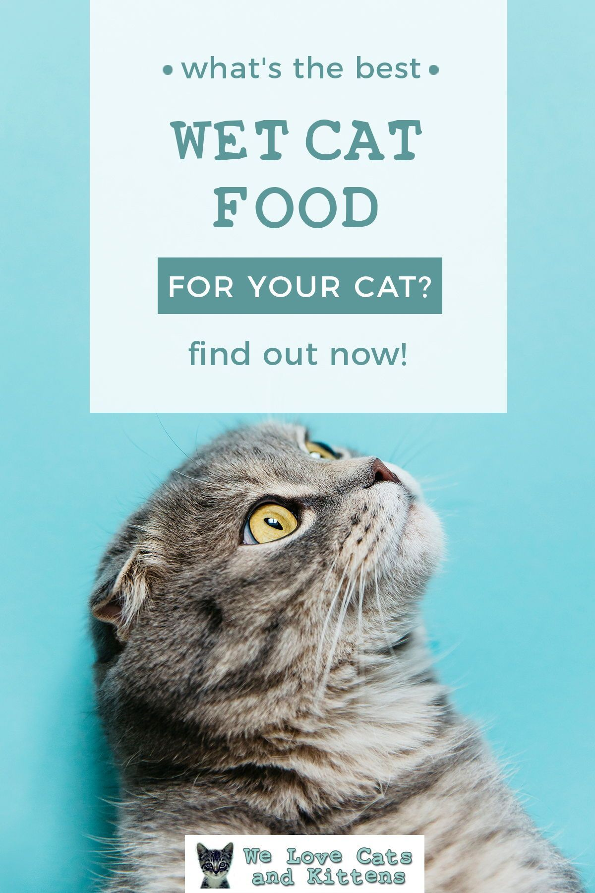 Best Wet Cat Food 2020 Reviews And Cat Food Guide In 2020 Cat Food Wet Cat Food Cat Allergies
