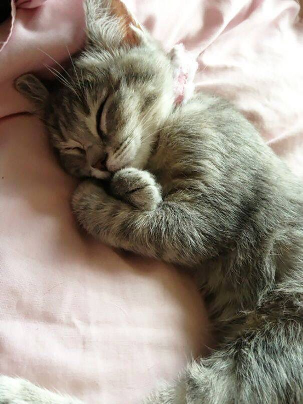 Sleeping Cute animals, Cute cats, Kittens cutest