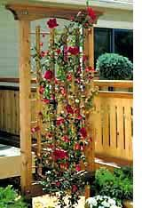 trellis designs climbing plants garden trellis wood project t