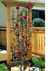 Trellis Designs Climbing Plants Garden Wood Project T His Unique Combines