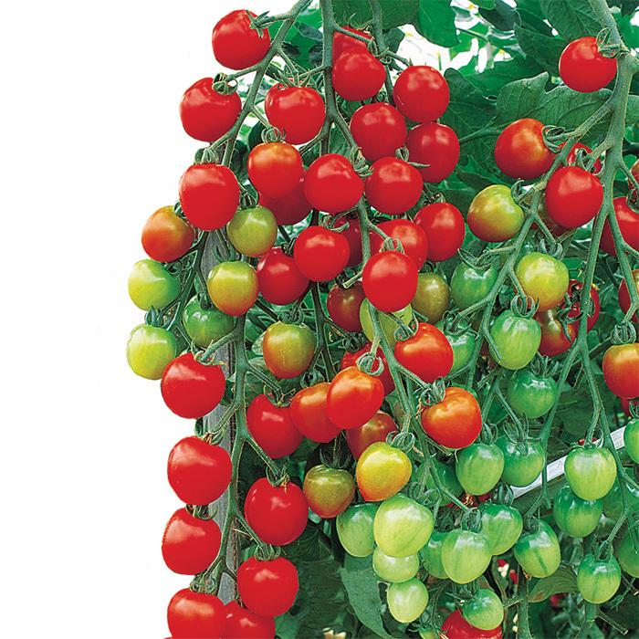 Pin On Thorne Farm 2021 Plant Varieties