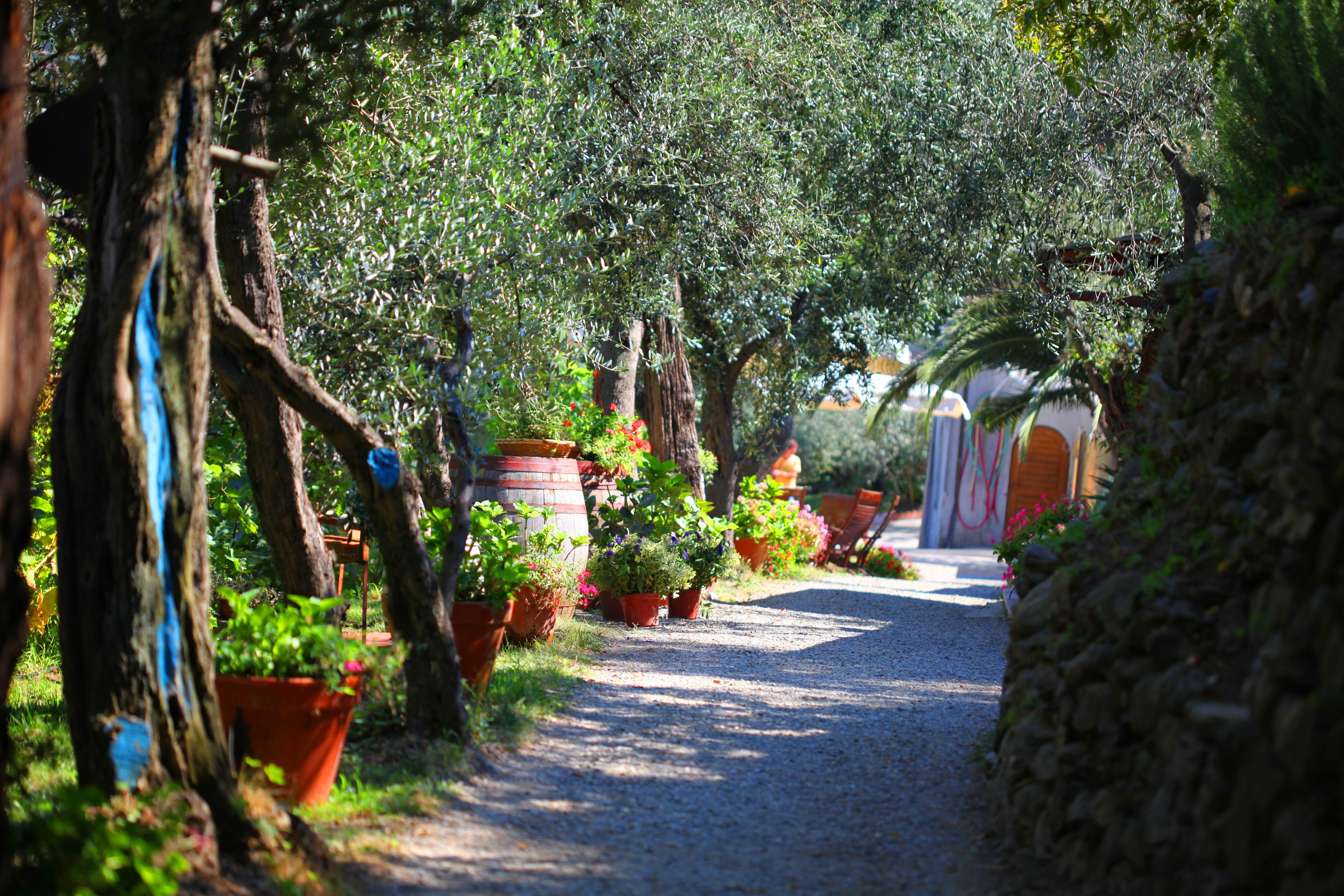 Buranco Vineyard, Wedding Venue, Cinque Terre, aisle to