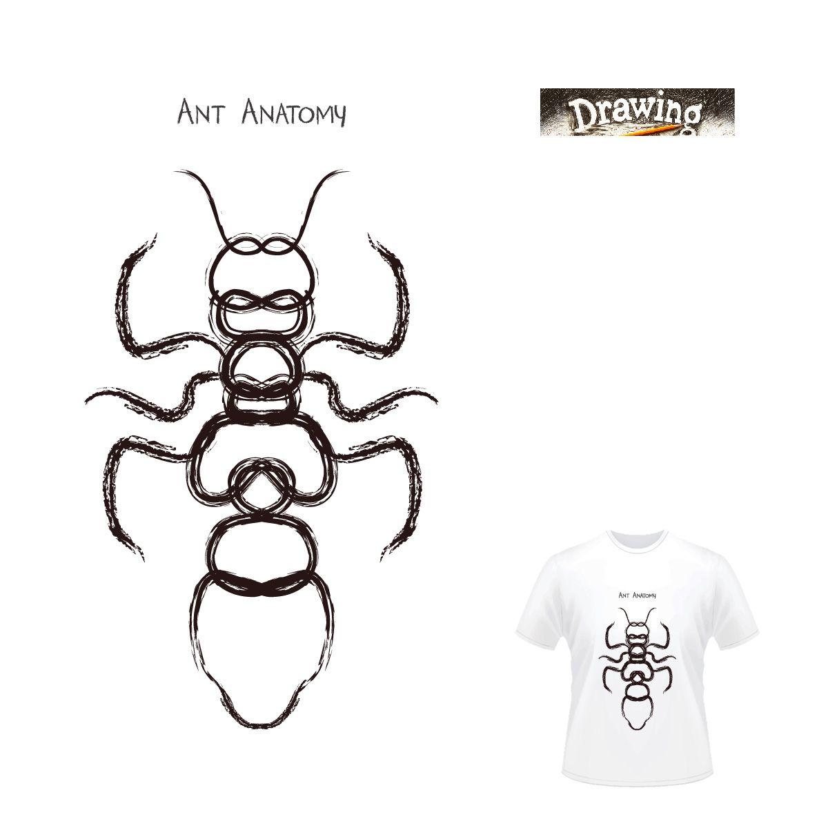 Outstanding Anatomy Of Termites Mold Human Anatomy Images