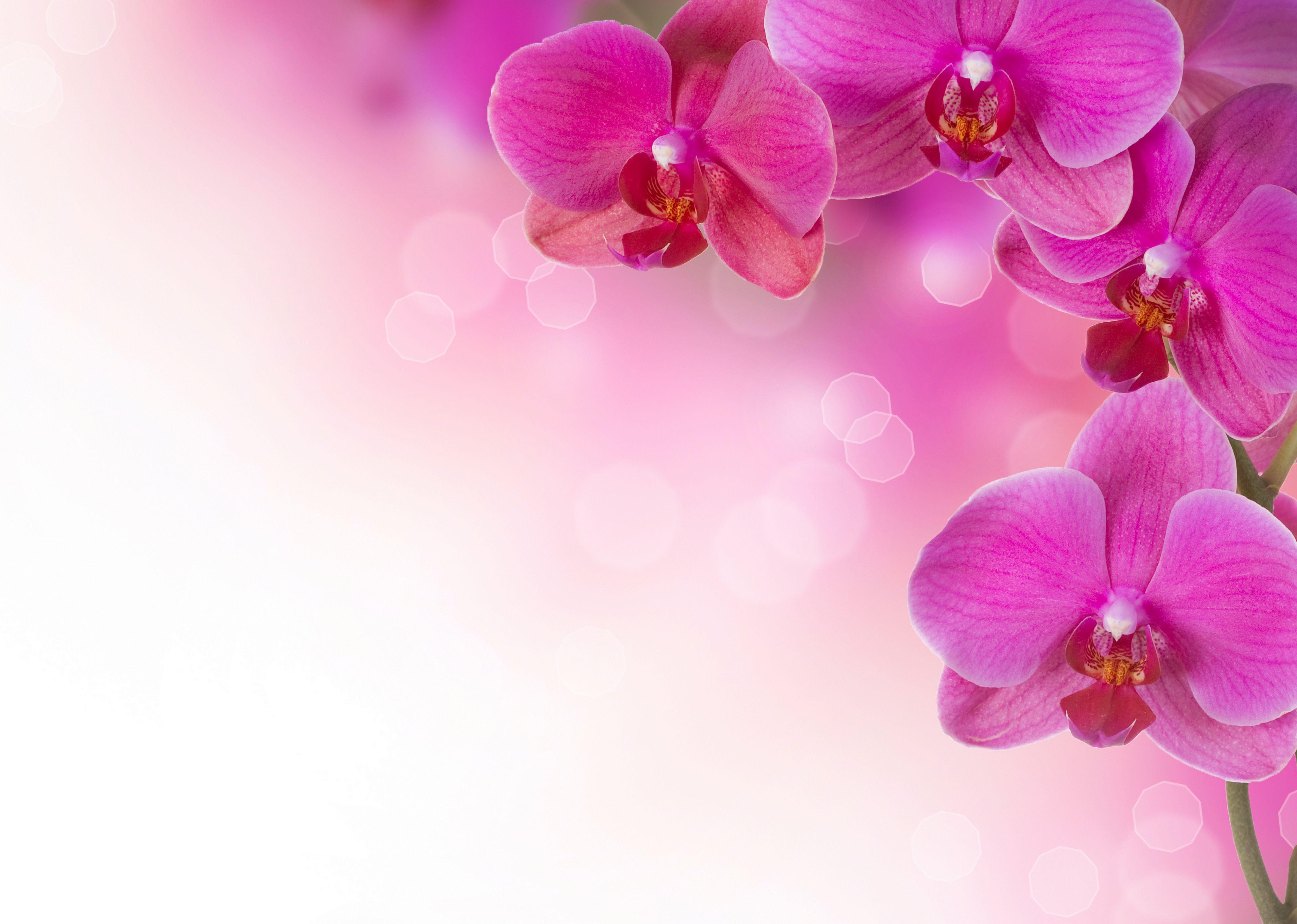 Blumen Hintergrundbilder Pink Flowers Wallpaper Orchid Wallpaper Flower Images Wallpapers