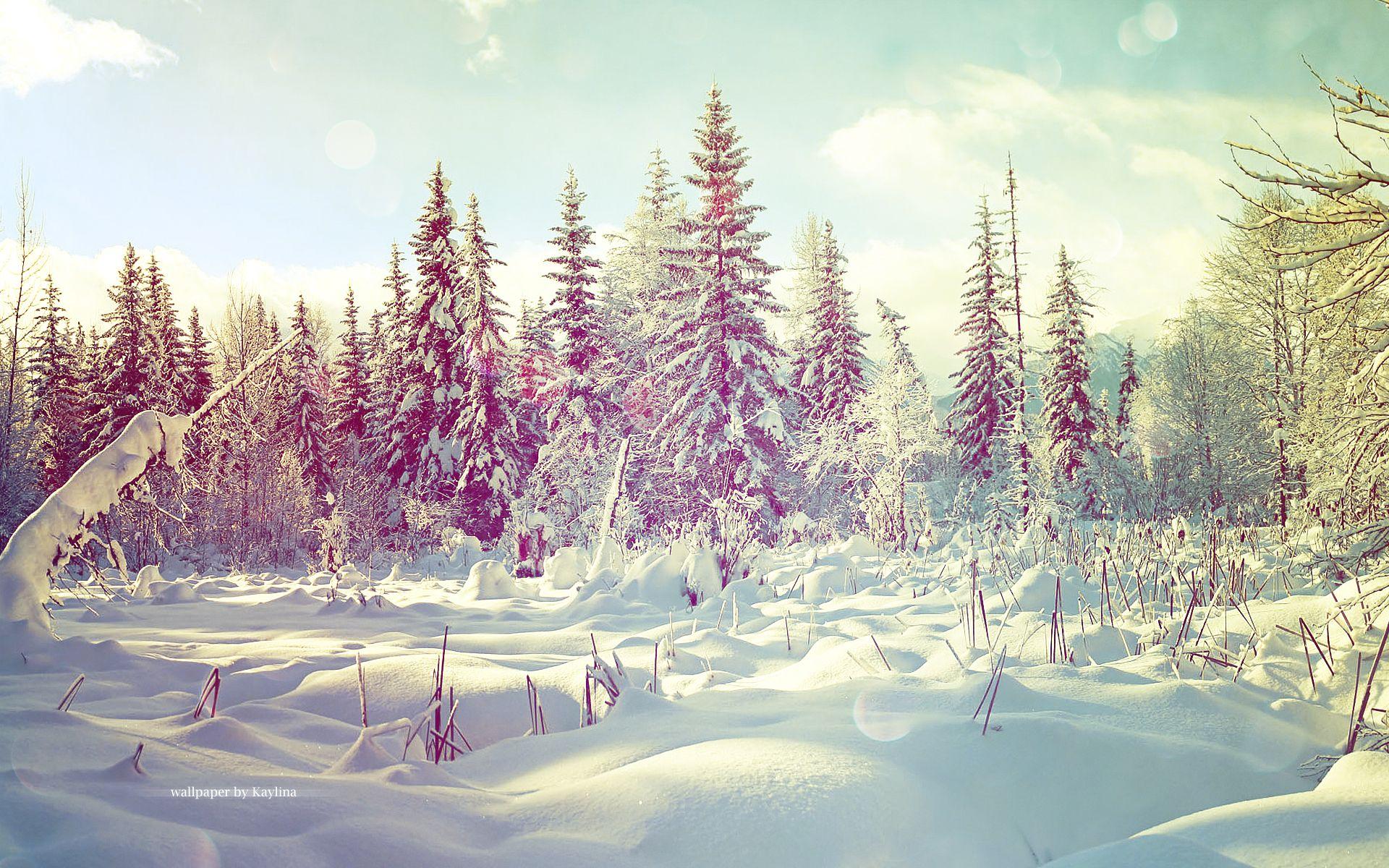 Winter wallpaper by on deviantART
