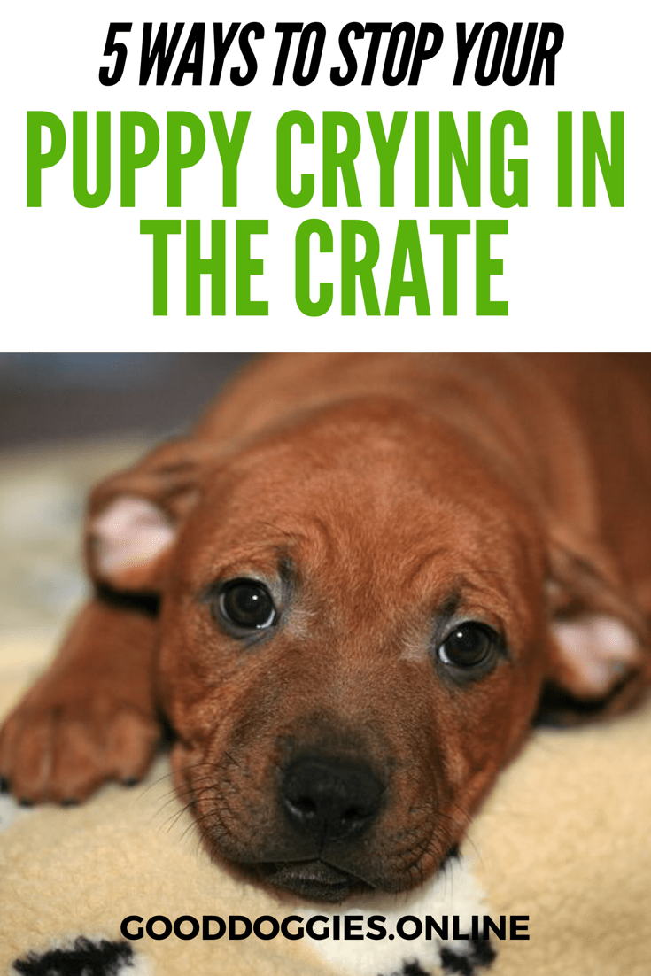 5 Ways To Stop Your Puppy From Crying In Crate Good Doggies Online Puppy Whining Puppy Care Puppy Training