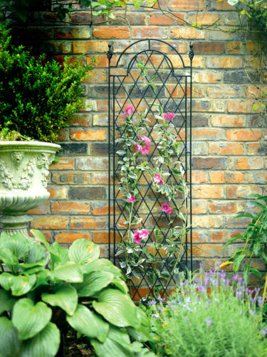 Tom Chambers Spiral Trellis With Trough Mounting
