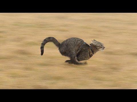 Supersonic cat - Julinčiny sprinty - YouTube