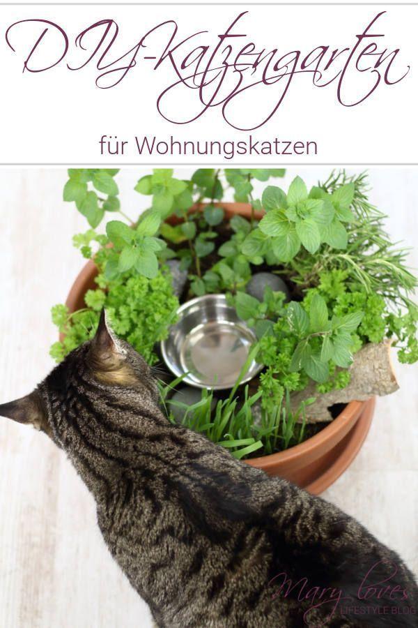 DIY-Katzengarten für Wohnungskatzen - Mary Loves #gardenupcycle
