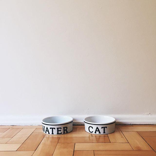 os potinhos de água e ração do gato foram comprados na @tokstok 🐱