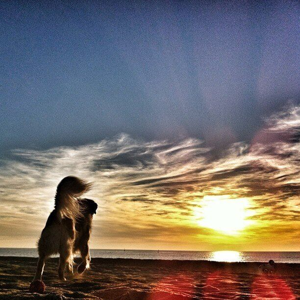 Dogs Friendship Is Like No Other And Youll Agree With These - 20 reasons why you should be thankful to have a dog