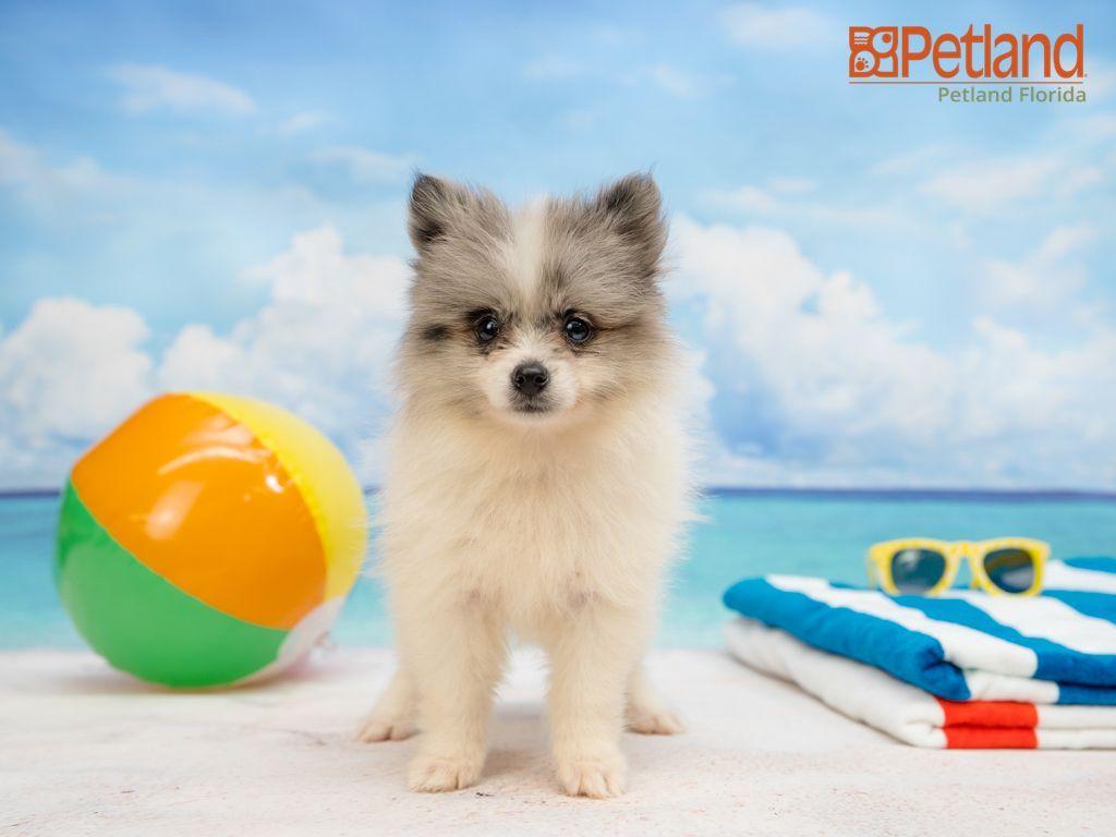 Petland pets for sale