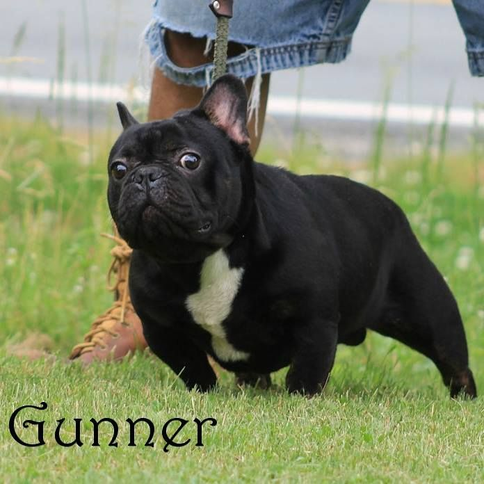 We Have Exciting News Gunner Is Going To Be A Daddy He Was