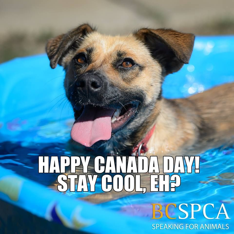 Adoption Page Happy Canada Day Animals Your Pet