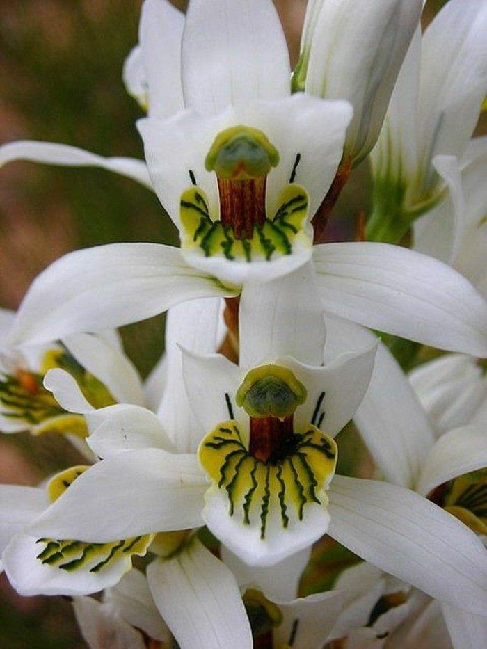 L Orchidee Rare La Plus Bizarre Ou Quand Les Orchidees Imitent La Vie Archzine Fr Orchidee Fleur Orchidee Fleurs Uniques