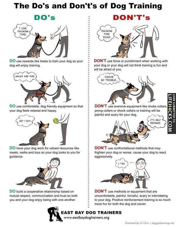 The Do S And Don Ts Of Dog Training Dogs Pet Pets Dog