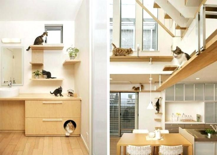 Image result for cat rooms designs CATS AND DOGS Pinterest Cat