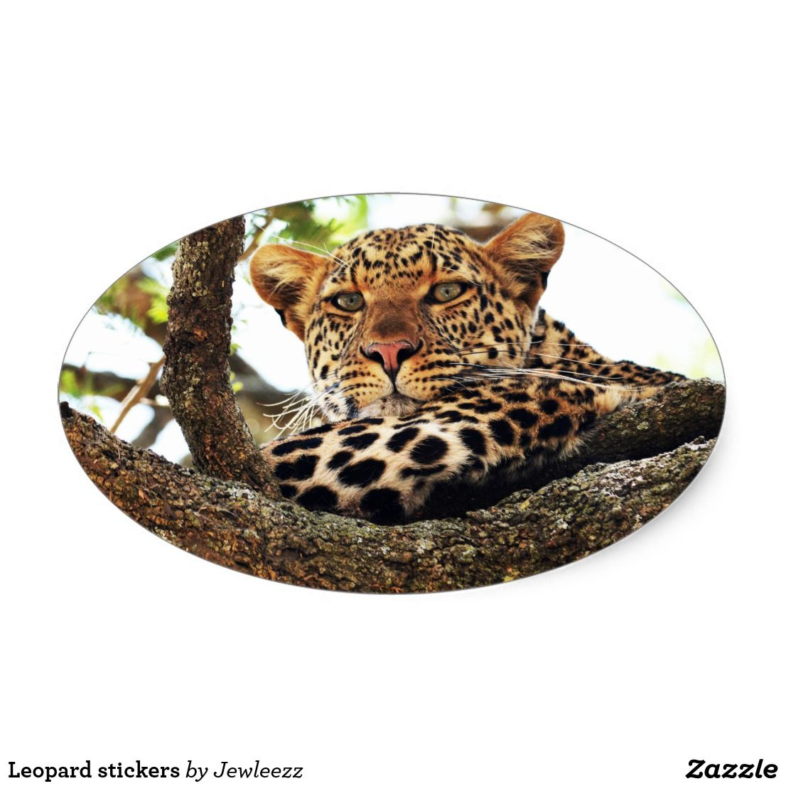 Leopard stickers leopards and photography
