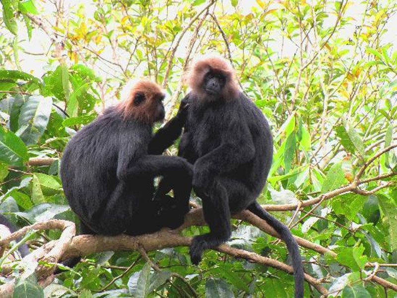 Mukurthi National Park in Tamil Nadu, India Wildlife