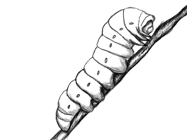 How to draw a caterpillar draw central
