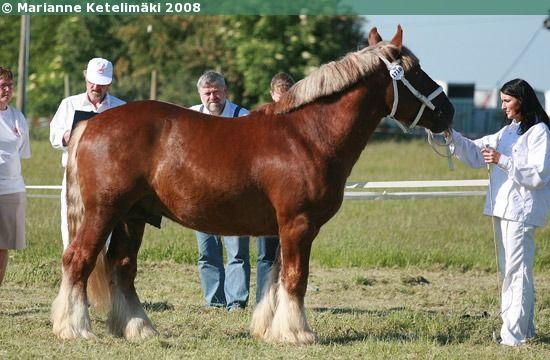 Jutland - stallion Christian