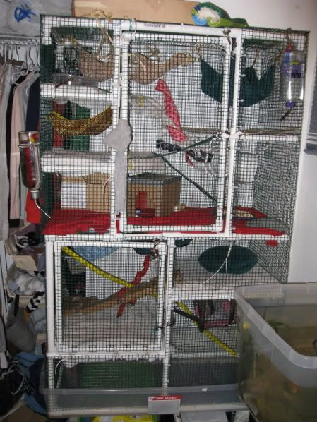 Diy Homemade Ferret Cage Idea Pvc Pipe Business Ferret