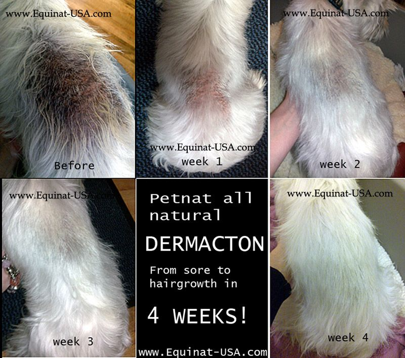 Dog with dermatitis treated with dermacton with images