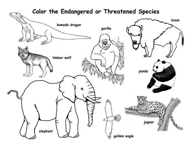 Endangered Animal Coloring Pages Art