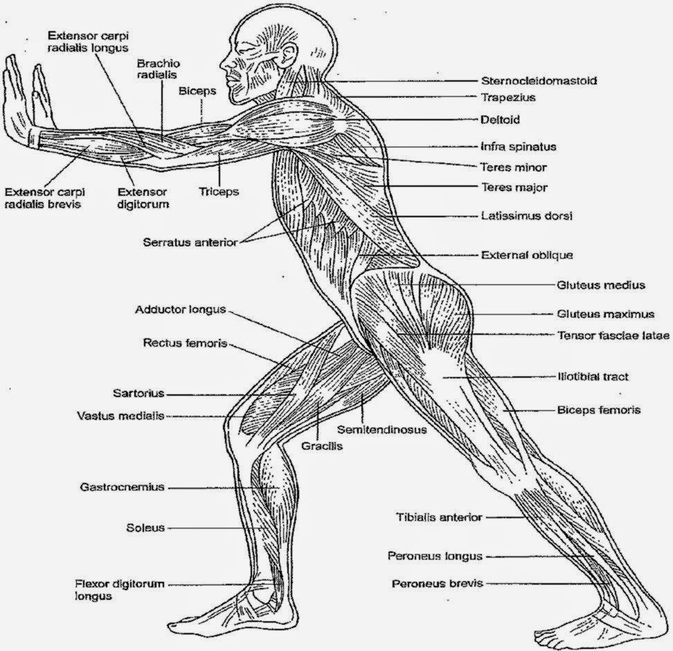 Anatomy Coloring Pages Coloringsuite Com Human Book Kaplan Pdf