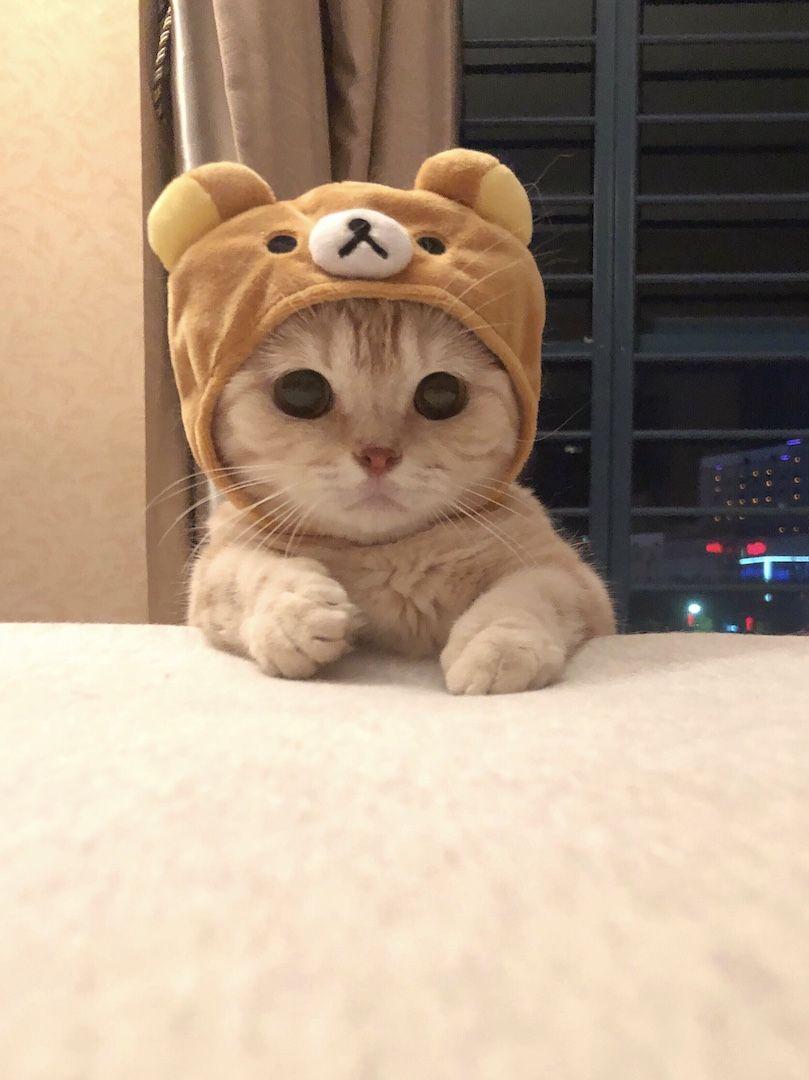 リラックマな猫がとても可愛い Netgeek 可愛い子猫 かわいい動物の赤ちゃん かわいいペット