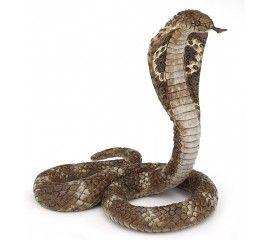 King Cobra Cobra Snake King Cobra King Cobra Snake