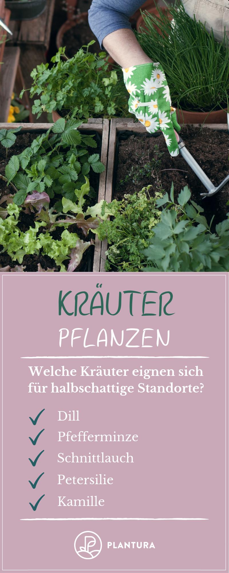 Kräuter pflanzen: Anleitungen & Tipps für Fensterbrett, Balkon & Beet #kleinekräutergärten