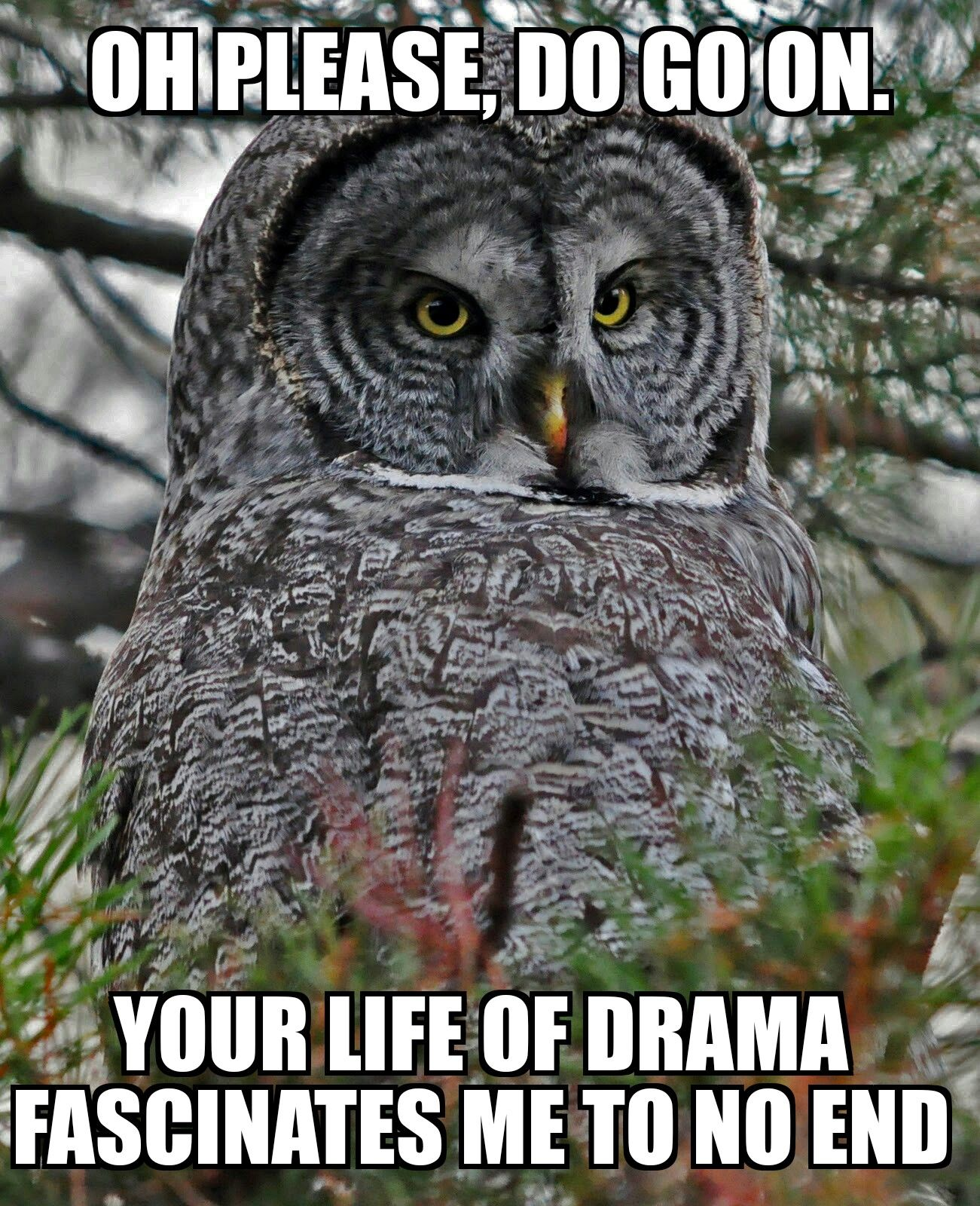 Sarcastic Owl Funny Owl Memes Great Grey Owl Owl