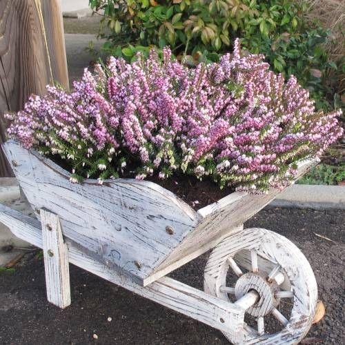 Brezo enano rosa terraza pinterest plantas enana y for Enano jardin