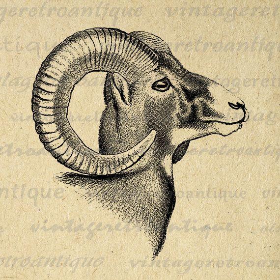 Digital Graphic Goat Download Ram Horns Animal Printable Image Vintage Clip Art Jpg Png Eps 18x18 Hq 300dpi No 470 Clip Art Vintage Animals Artwork Vintage Art